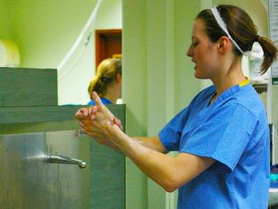 vet washing hands