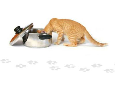 Nutrition For Your Healthy Cat