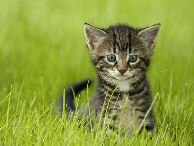 Cat Poisons A - Z