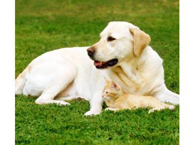 Older Dog Care