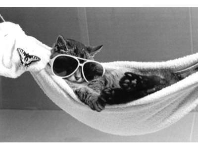 http://www.vetedit.com/clientFiles/images/advice/Cat-wearing-sunglasses-lies-in-a-hammock-R-diger-Poborsky-200537_129137641037750000.jpg
