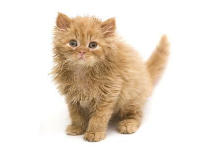 Happy Kitten Booklet