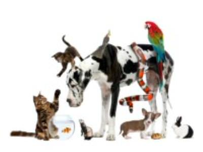 Flea, worm, vaccination and neutering Protocols