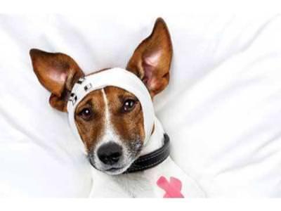 Common Canine Emergencies