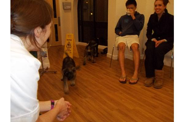 Orlaith answers some questions while puppies play