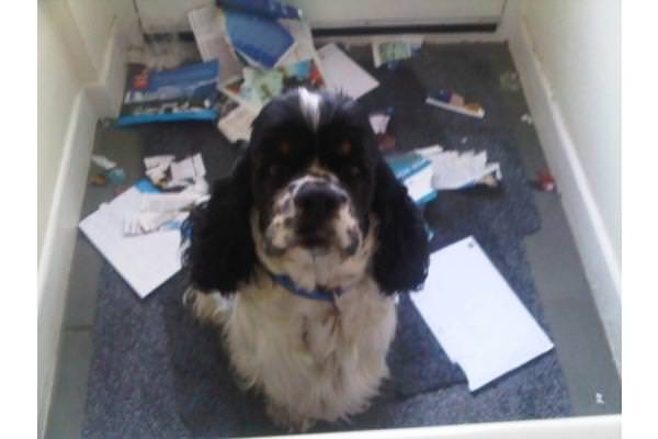 Douggie helps with the mail...