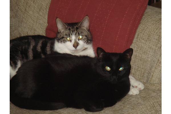 Max and Kooky