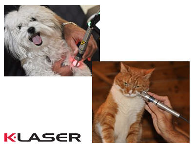Vets4Pets Bramley - K-Laser treatment for your cat or dog