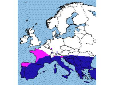 NEW LEISHMANIA VACCINE FOR DOGS VISITING MEDITERRANEAN EUROPE