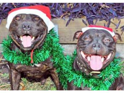 Pet Owners warned about Christmas