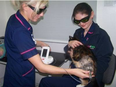 Laser therapy has arrived at Wakefield Vets4Pets