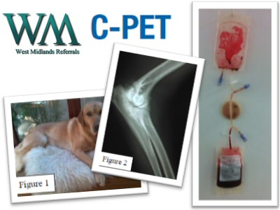 New C-PET Platelet Therapy Case Study