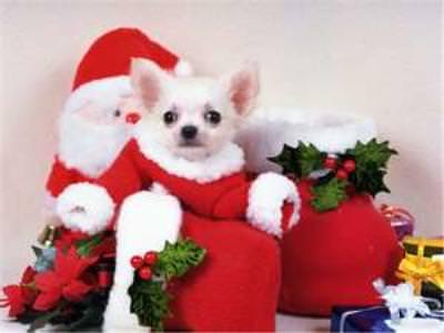 The 12 hazards of Christmas