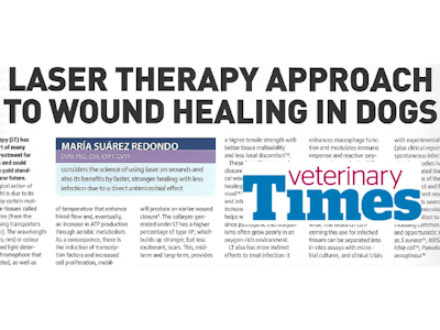 Vet Times: Laser Therapy for Wound Healing in Dogs