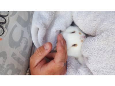 Newborn rabbits