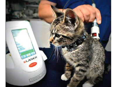 Time to Invest in Laser Therapy?