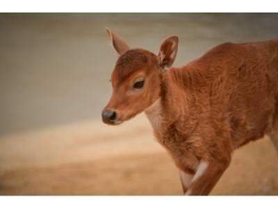 Baby Jasmine 2