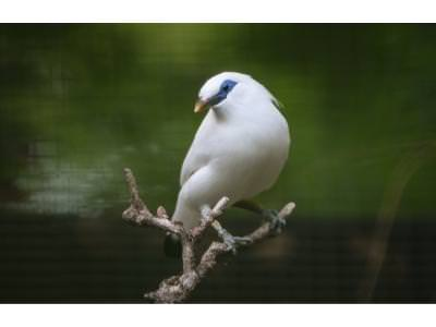 Chester Zoo Working to Save Endangered Birds
