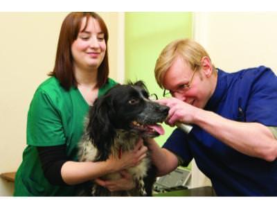Pet Health Club