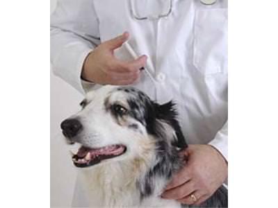 Vaccinations Program
