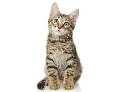 Ardmore Veterinary Group Ltd Kidney Disease In Cats Sudbury Suffolk Great Yeldham Essex