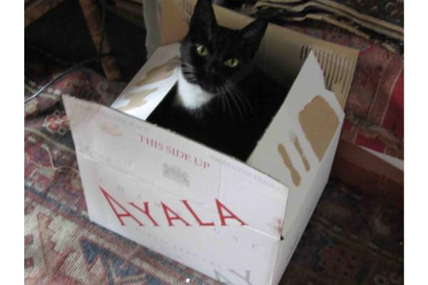 Ayala, named after the champagne marque!