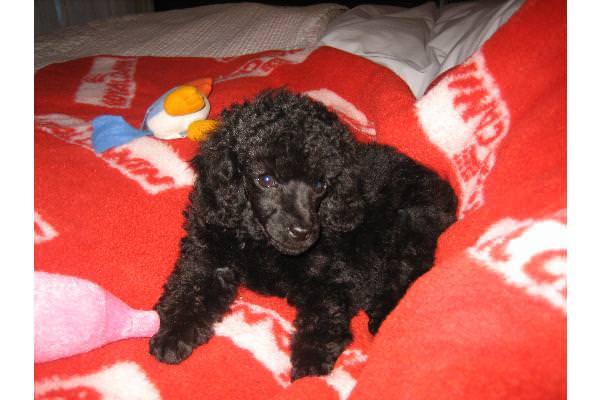 Bessie at nine and a half weeks