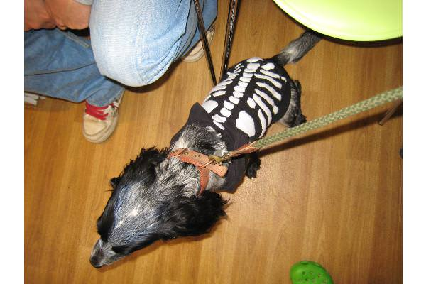 Beam in skeleton suit