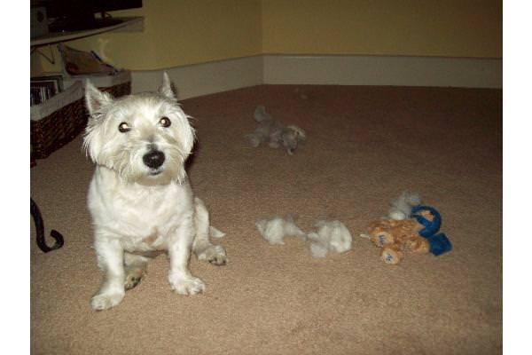 Judy - Massacre of the Teddies