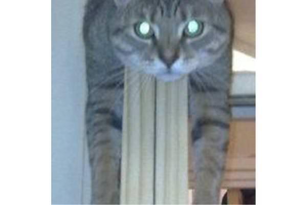 Pushkin on the kitchen door - cool cat!