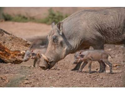 Latest arrivals at Chester Zoo hog the spotlight